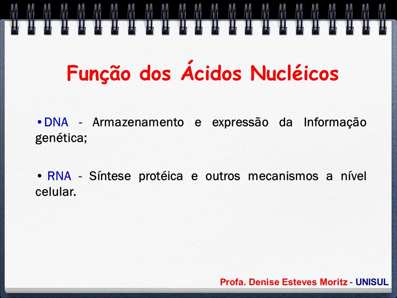 Função dos Ácidos Nucléicos