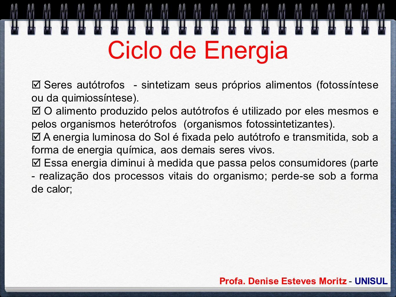 Ciclo de Energia Seres autótrofos - sintetizam seus próprios alimentos (fotossíntese ou da quimiossíntese).