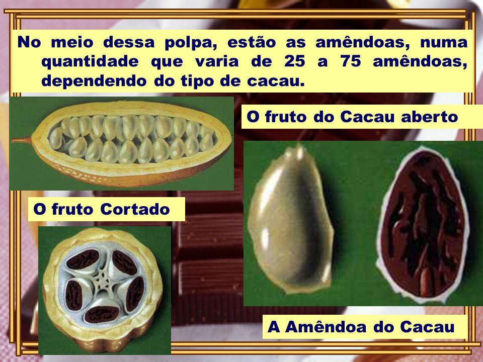 No meio dessa polpa, estão as amêndoas, numa quantidade que varia de 25 a 75 amêndoas, dependendo do tipo de cacau.