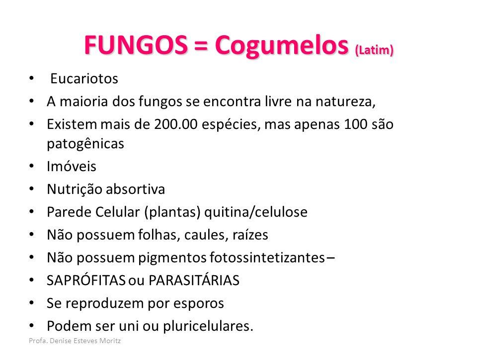 FUNGOS = Cogumelos (Latim)