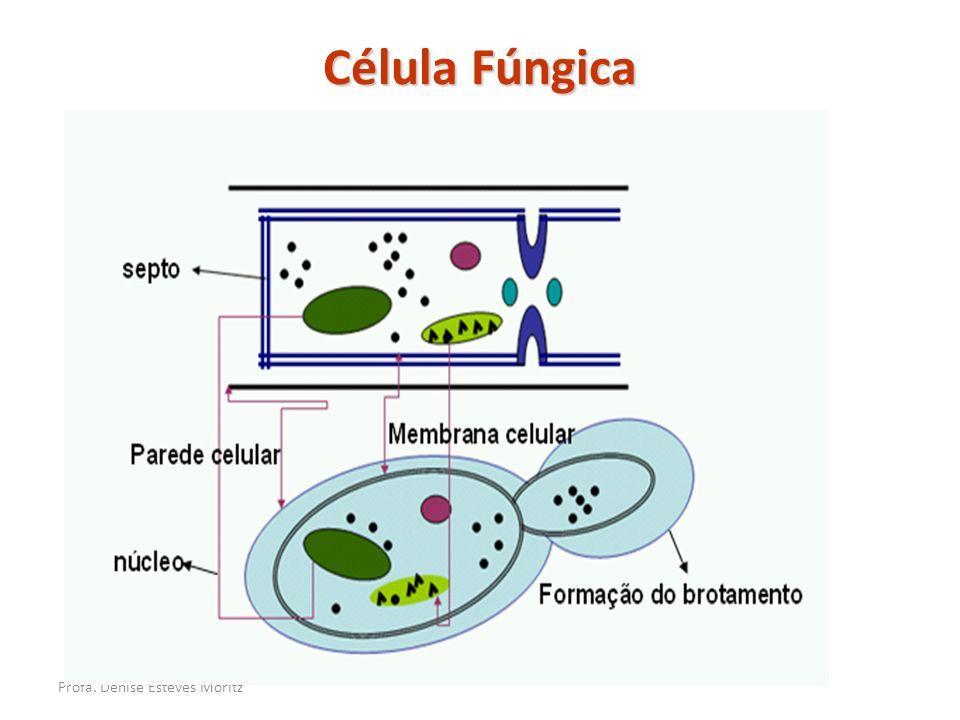 Célula Fúngica Profa. Denise Esteves Moritz