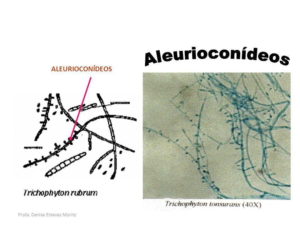 Aleurioconídeos ALEURIOCONÍDEOS Profa. Denise Esteves Moritz
