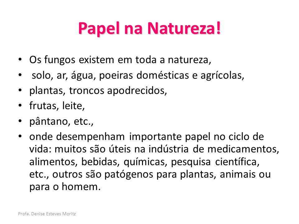 Papel na Natureza! Os fungos existem em toda a natureza,