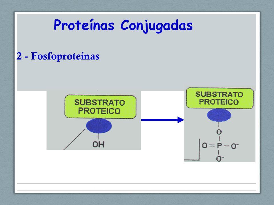 Proteínas Conjugadas 2 - Fosfoproteínas