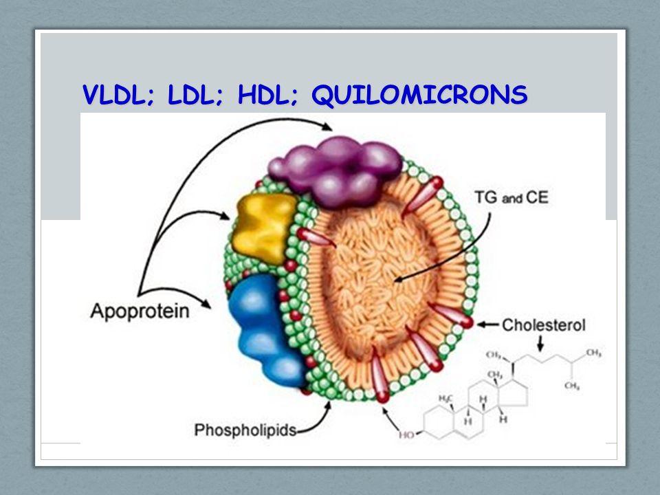 VLDL; LDL; HDL; QUILOMICRONS