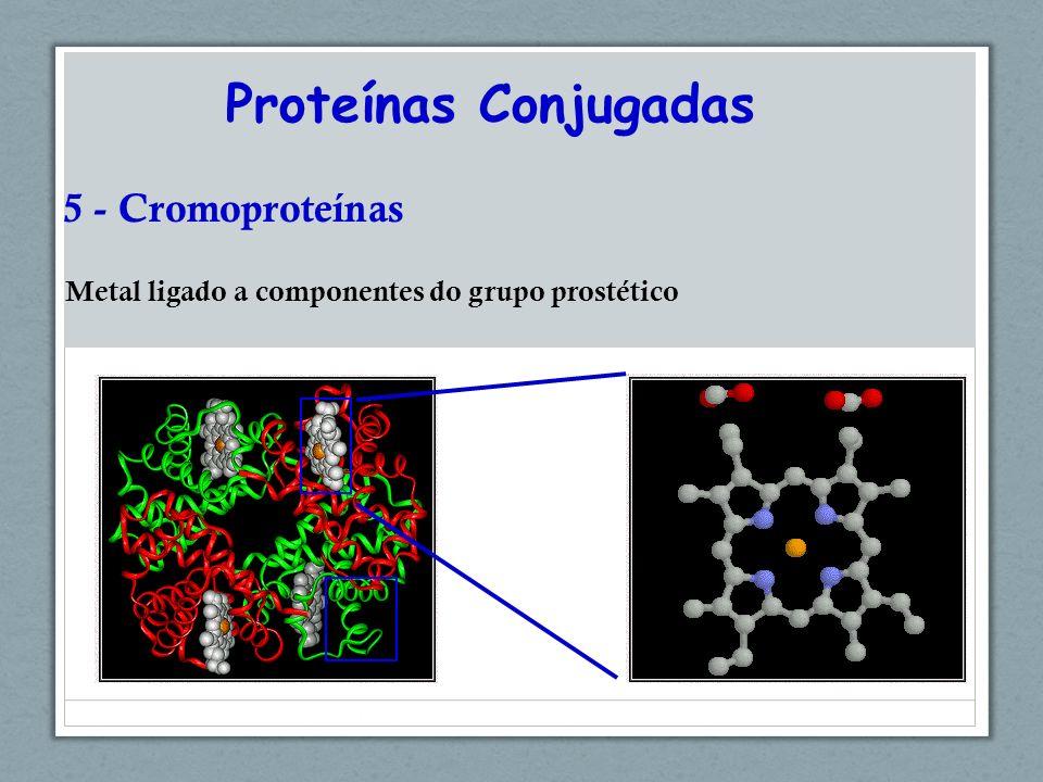 Proteínas Conjugadas 5 - Cromoproteínas