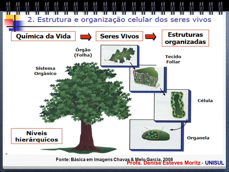 Fonte: Básica em Imagens Chavas & Melo Garcia, 2008