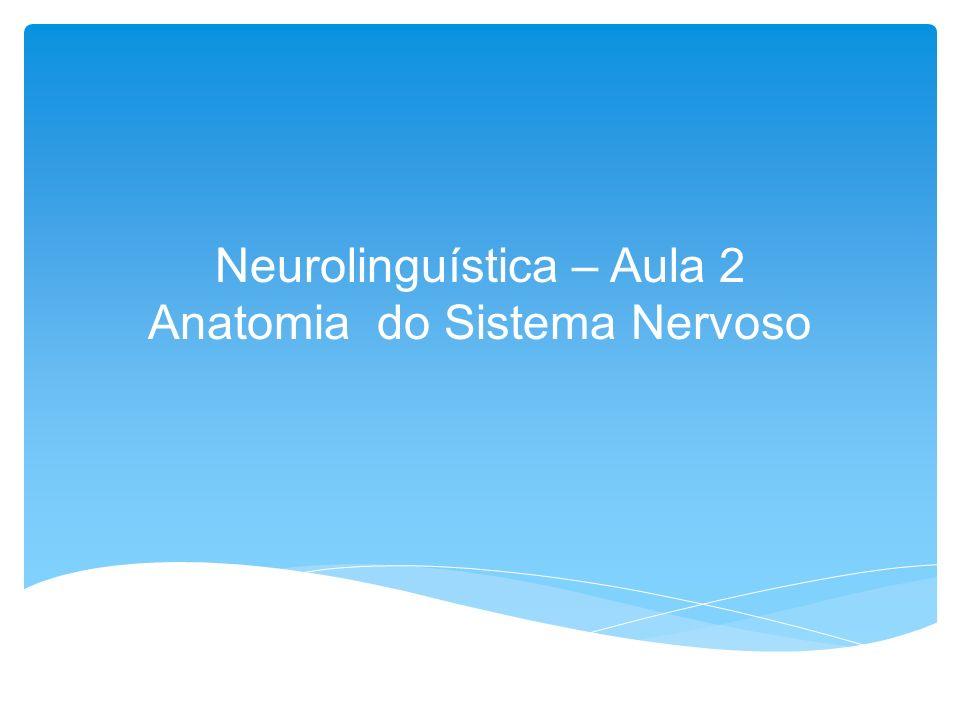 Neurolinguística – Aula 2 Anatomia do Sistema Nervoso