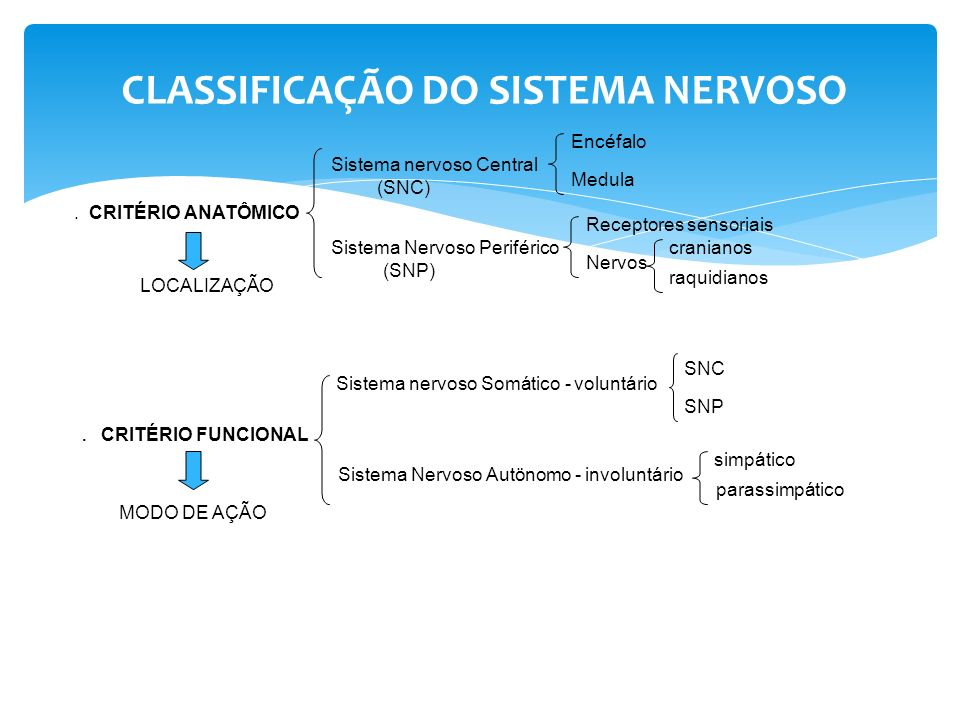 CLASSIFICAÇÃO DO SISTEMA NERVOSO