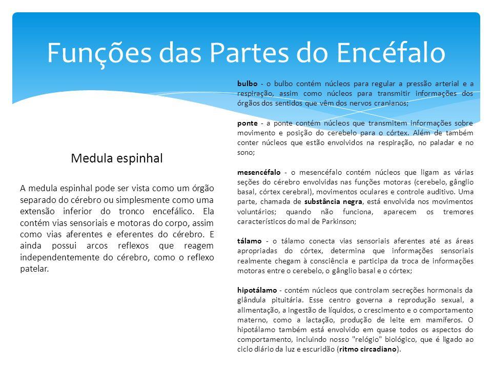 Funções das Partes do Encéfalo