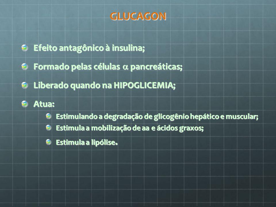 GLUCAGON Efeito antagônico à insulina;