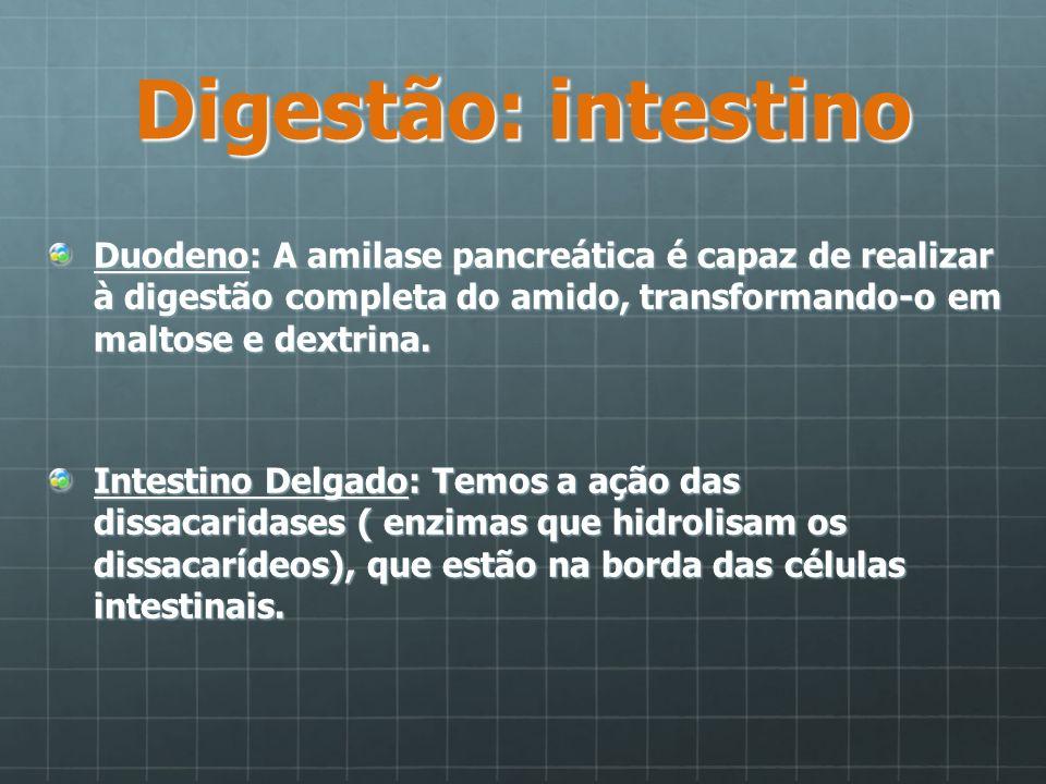 Digestão: intestino Duodeno: A amilase pancreática é capaz de realizar à digestão completa do amido, transformando-o em maltose e dextrina.