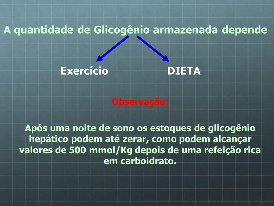 A quantidade de Glicogênio armazenada depende