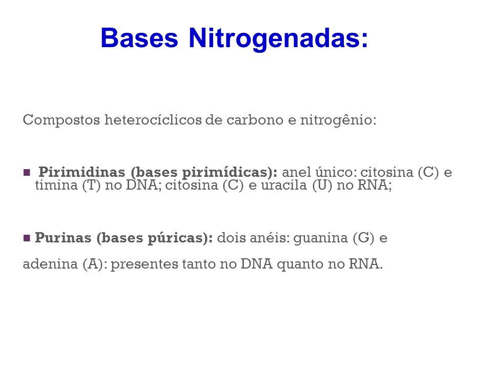 Bases Nitrogenadas: Compostos heterocíclicos de carbono e nitrogênio:
