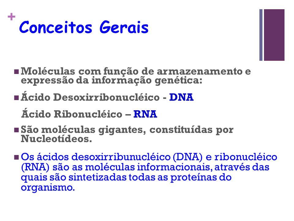 Conceitos Gerais Moléculas com função de armazenamento e expressão da informação genética: Ácido Desoxirribonucléico - DNA.