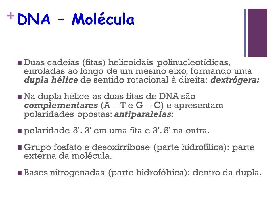 DNA – Molécula