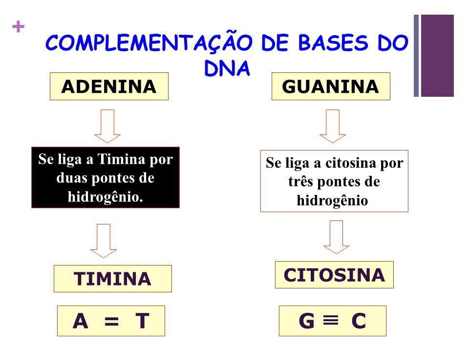 COMPLEMENTAÇÃO DE BASES DO DNA