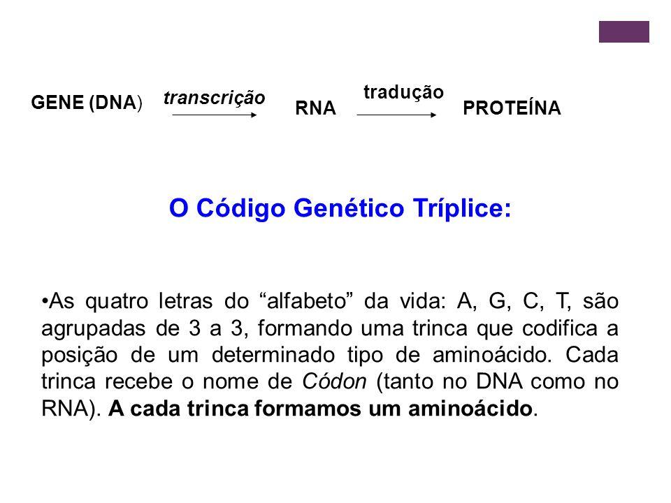 O Código Genético Tríplice: