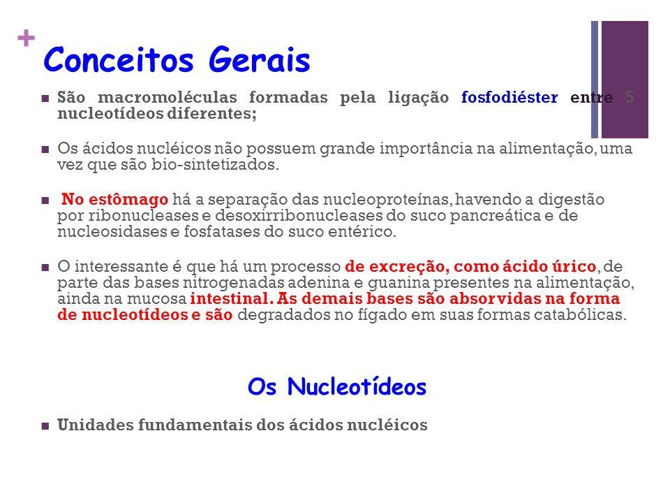 Conceitos Gerais Os Nucleotídeos