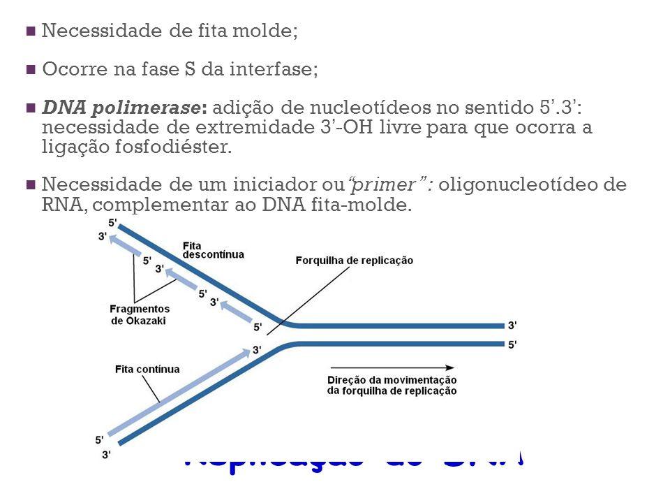 Replicação do DNA Necessidade de fita molde;