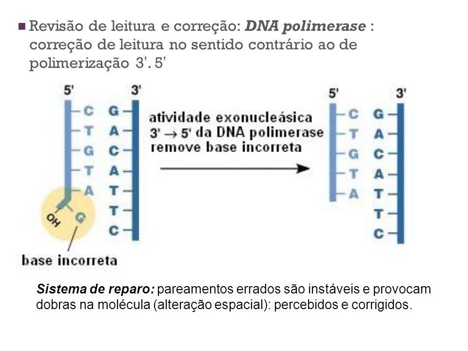Revisão de leitura e correção: DNA polimerase : correção de leitura no sentido contrário ao de polimerização 3'. 5'