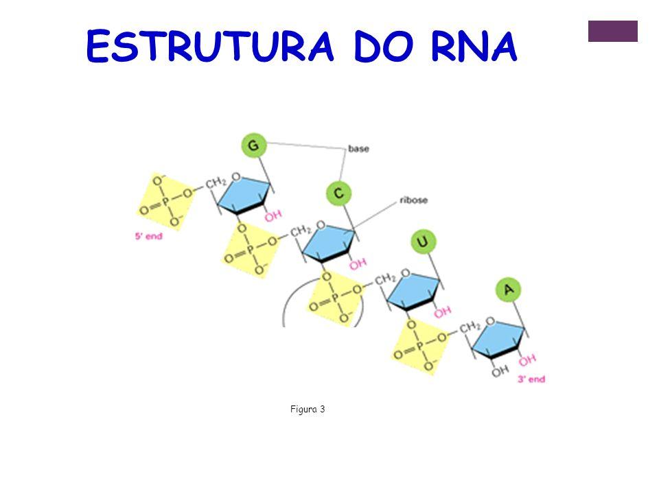 ESTRUTURA DO RNA Figura 3
