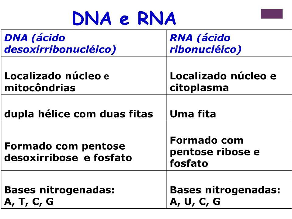 DNA e RNA DNA (ácido desoxirribonucléico) RNA (ácido ribonucléico)