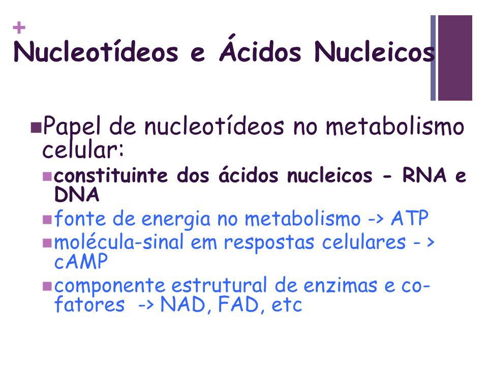 Nucleotídeos e Ácidos Nucleicos