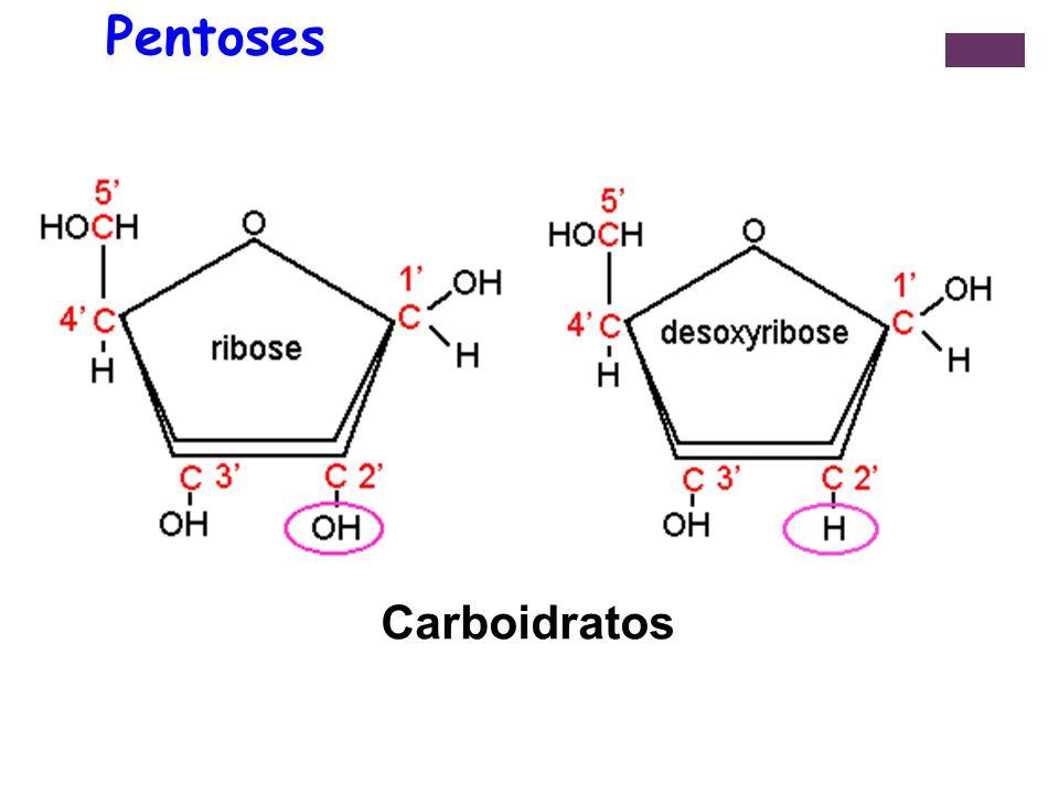 Pentoses Carboidratos 9