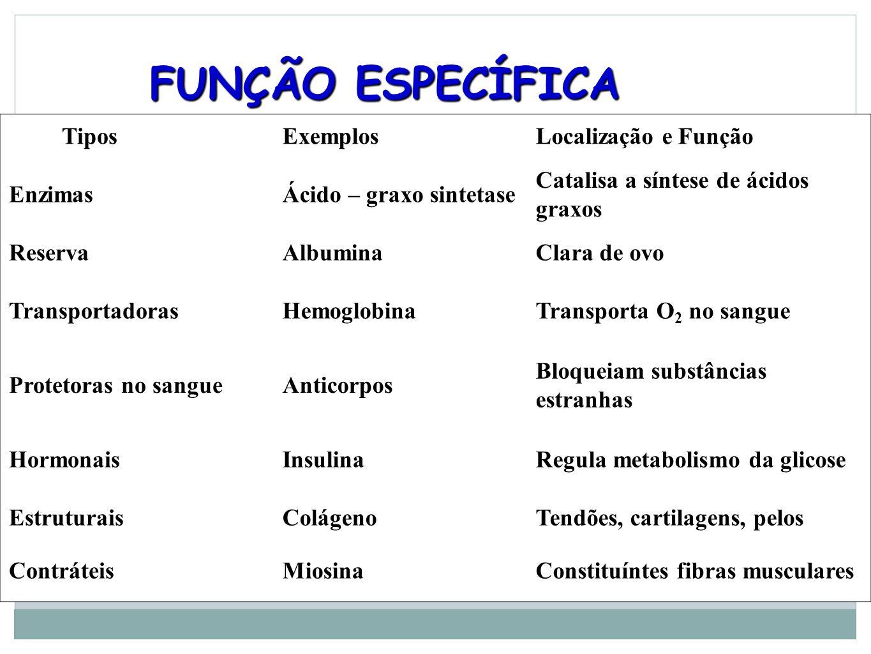 FUNÇÃO ESPECÍFICA Tipos Exemplos Localização e Função Enzimas