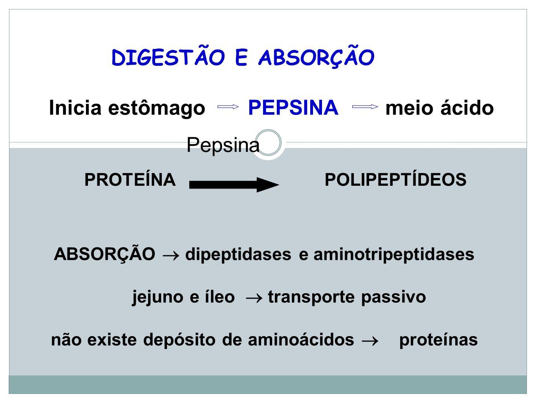Inicia estômago PEPSINA meio ácido