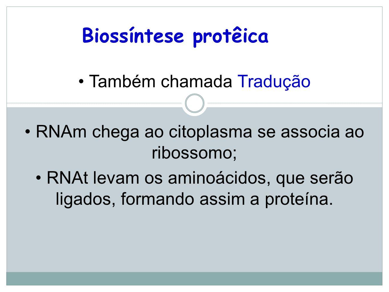 Biossíntese protêica Também chamada Tradução
