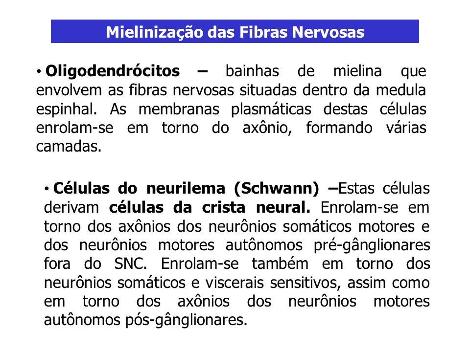 Mielinização das Fibras Nervosas