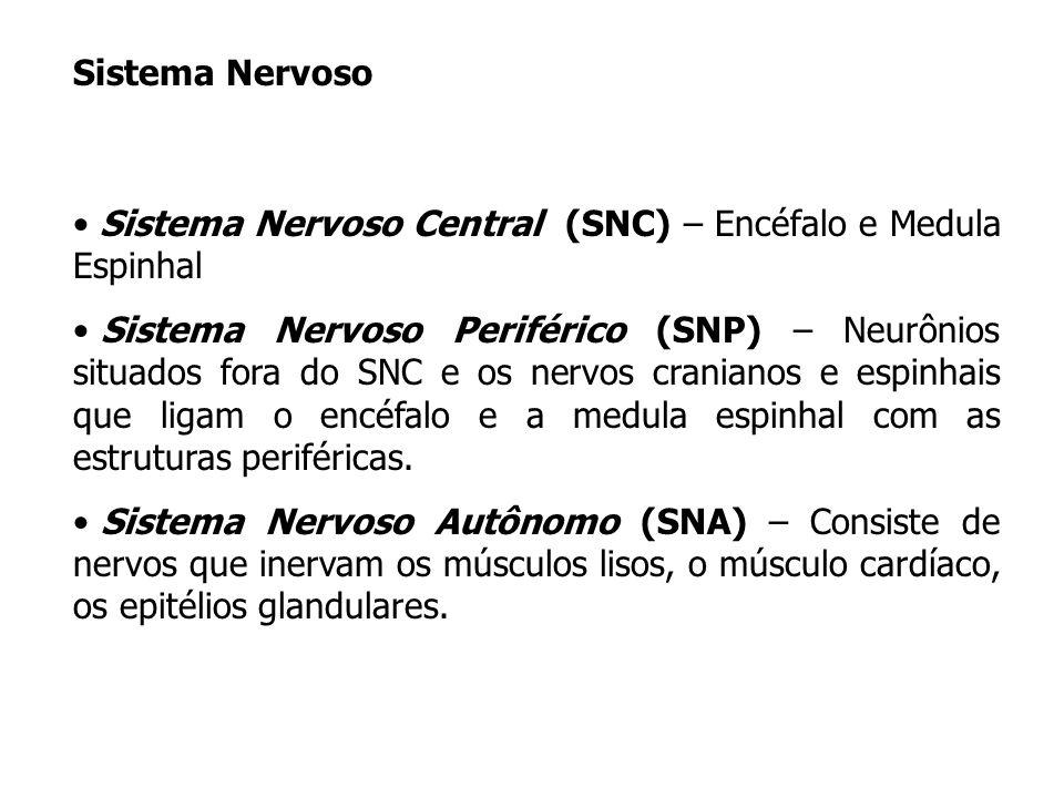 Sistema Nervoso Sistema Nervoso Central (SNC) – Encéfalo e Medula Espinhal.