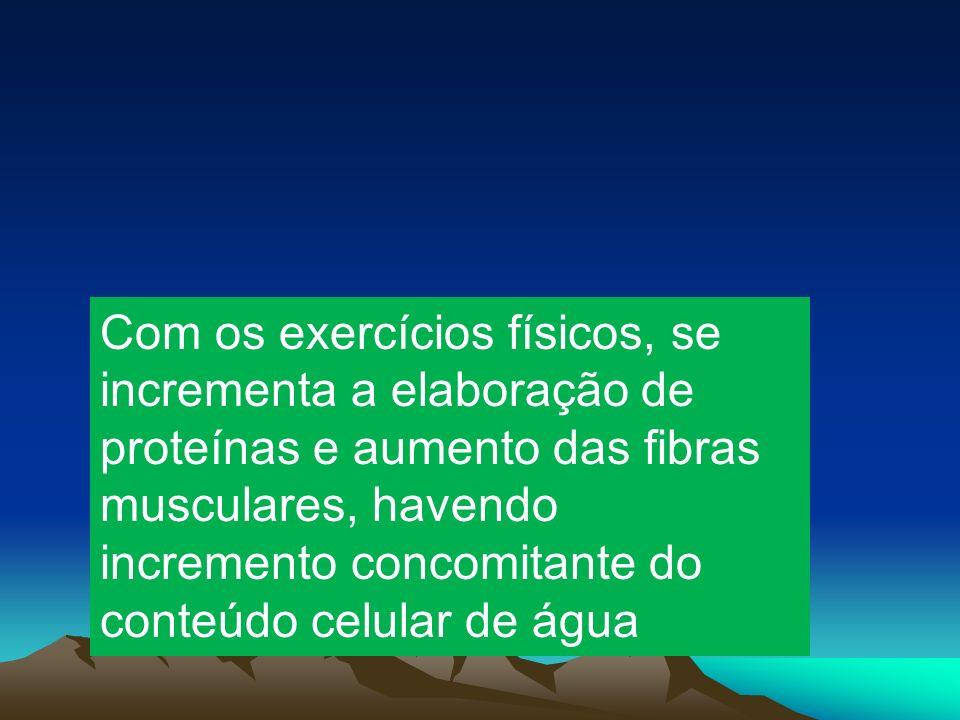 Com os exercícios físicos, se incrementa a elaboração de proteínas e aumento das fibras musculares, havendo incremento concomitante do conteúdo celular de água