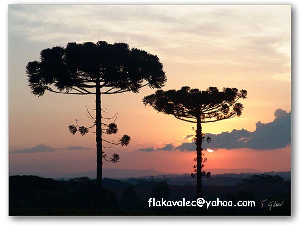 flakavalec@yahoo.com