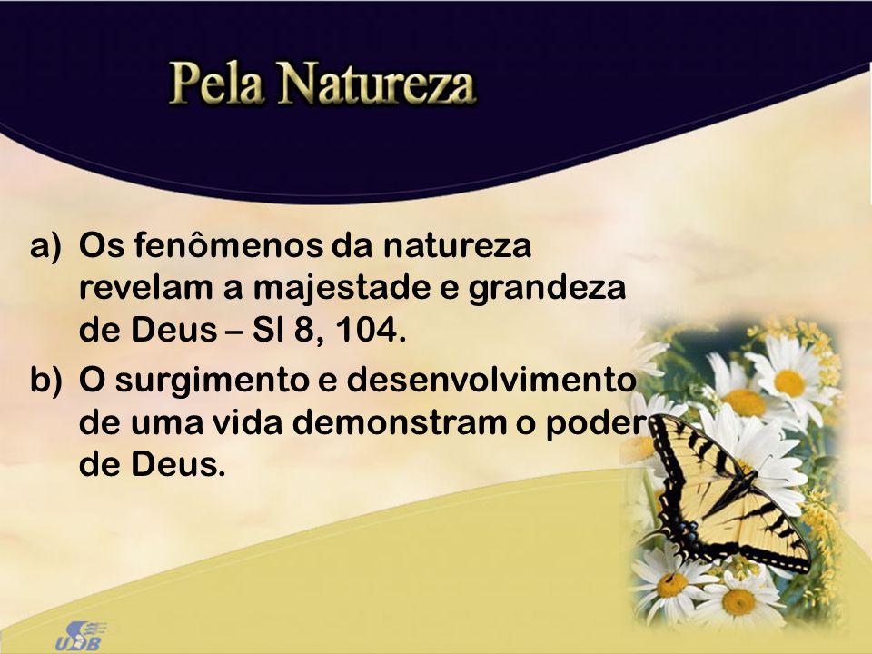 Os fenômenos da natureza revelam a majestade e grandeza de Deus – Sl 8, 104.