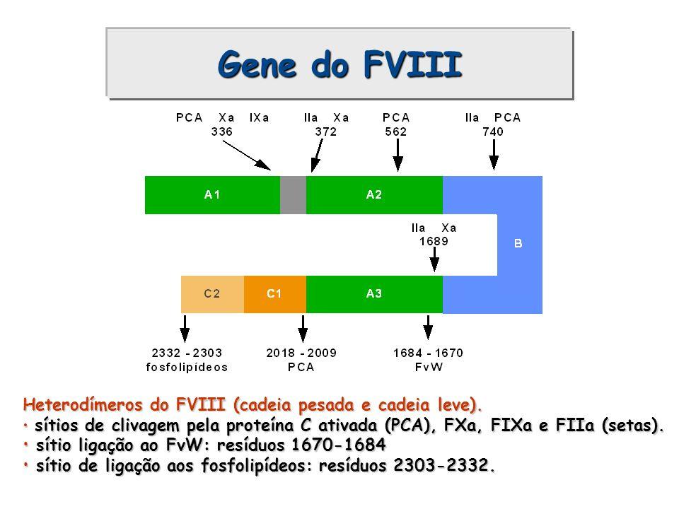 Gene do FVIII Heterodímeros do FVIII (cadeia pesada e cadeia leve).