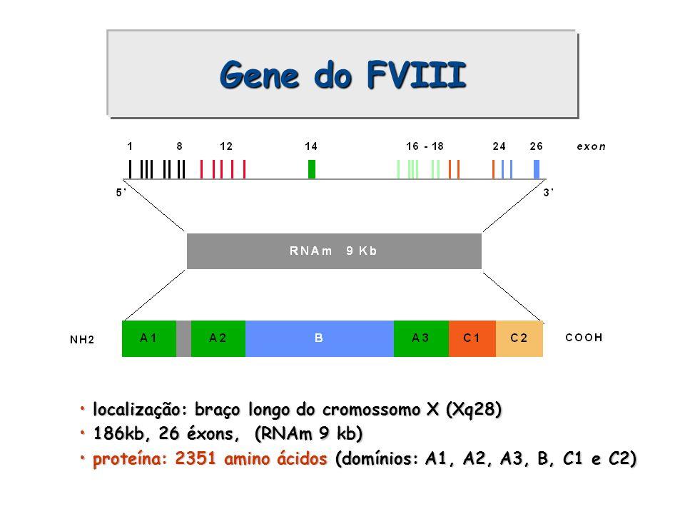 Gene do FVIII localização: braço longo do cromossomo X (Xq28)