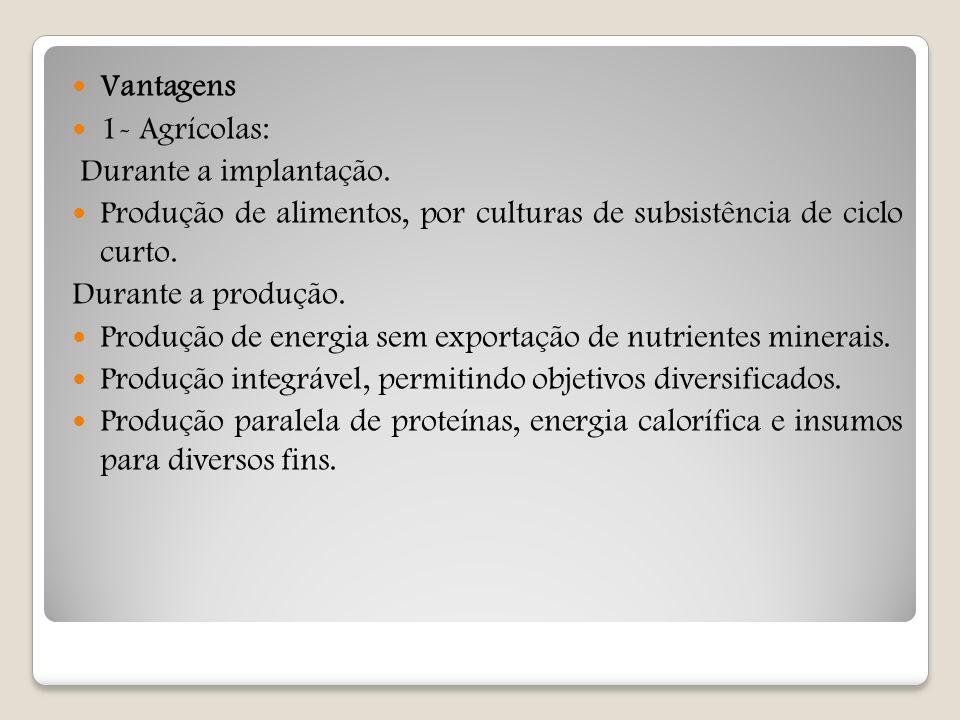 Vantagens 1- Agrícolas: Durante a implantação. Produção de alimentos, por culturas de subsistência de ciclo curto.