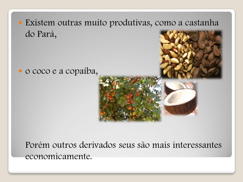 Existem outras muito produtivas, como a castanha do Pará,