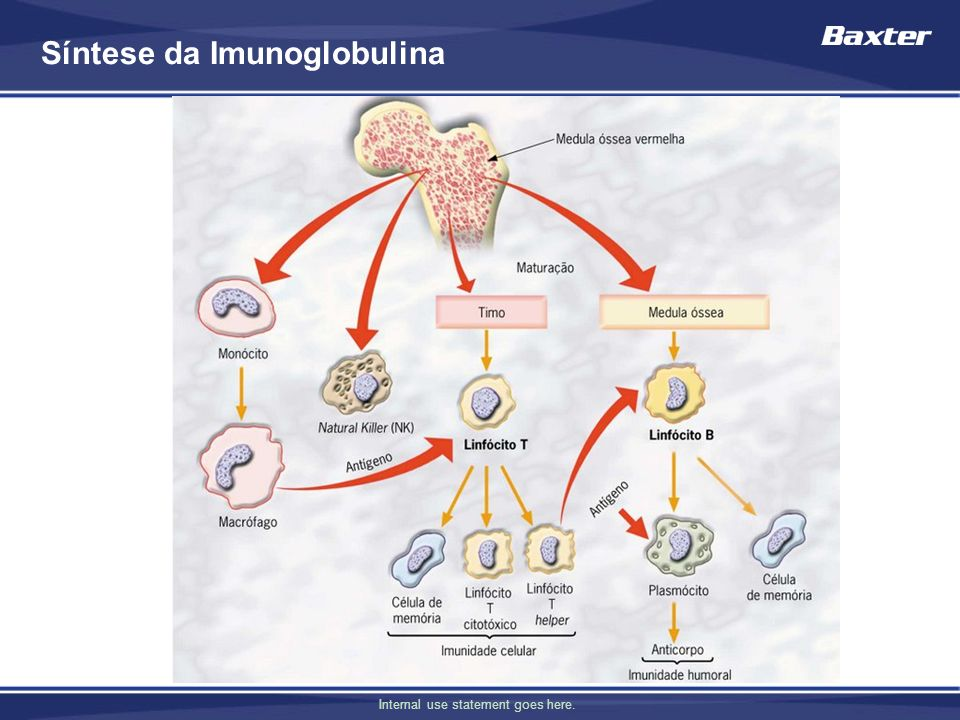 Síntese da Imunoglobulina