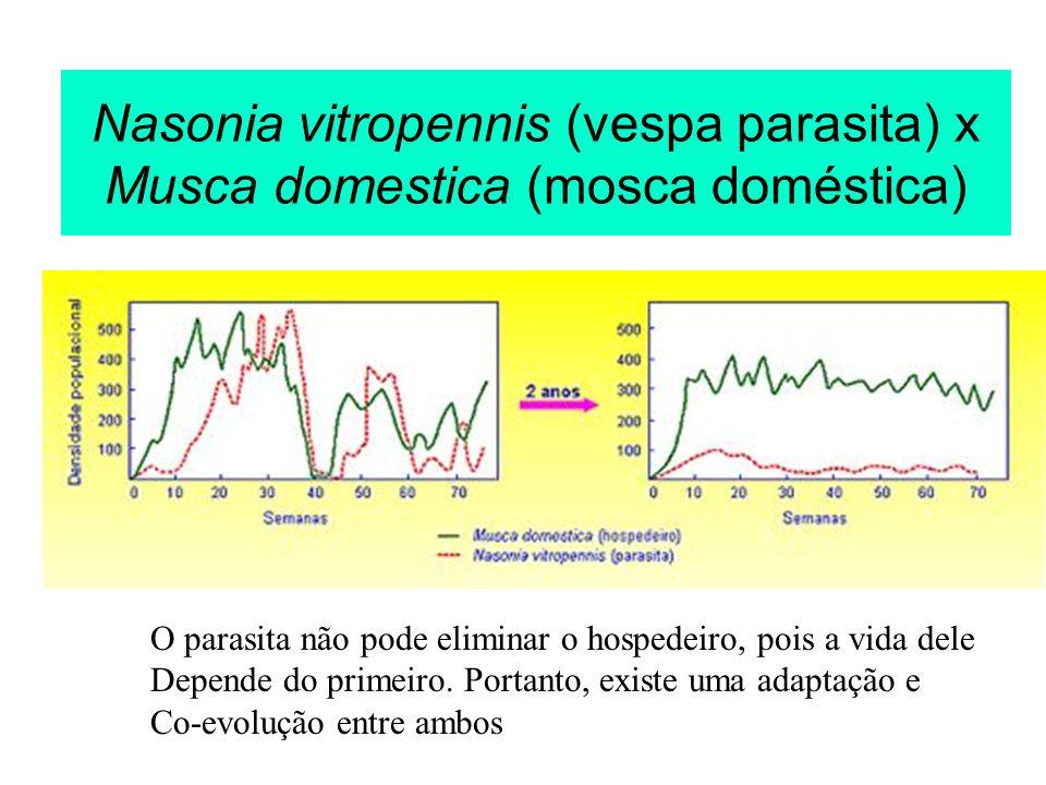 Nasonia vitropennis (vespa parasita) x Musca domestica (mosca doméstica)