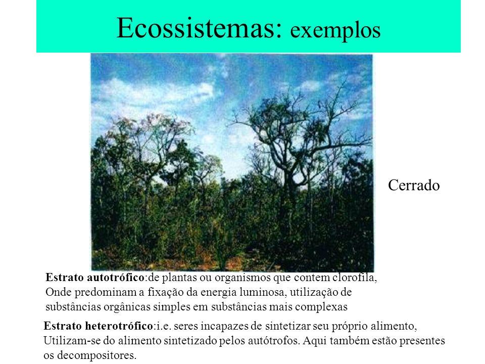 Ecossistemas: exemplos