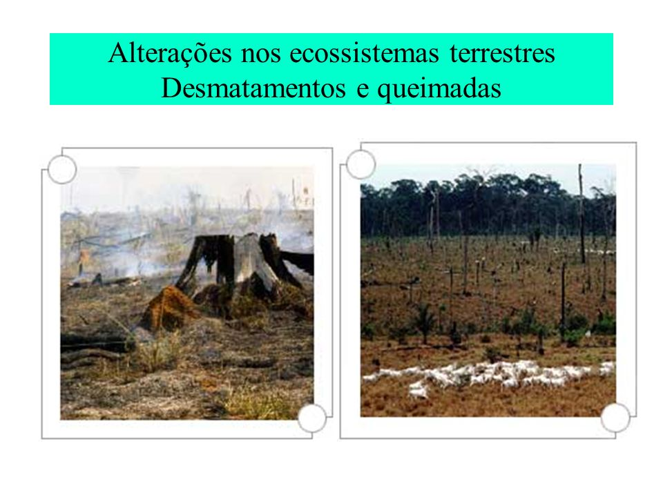 Alterações nos ecossistemas terrestres Desmatamentos e queimadas