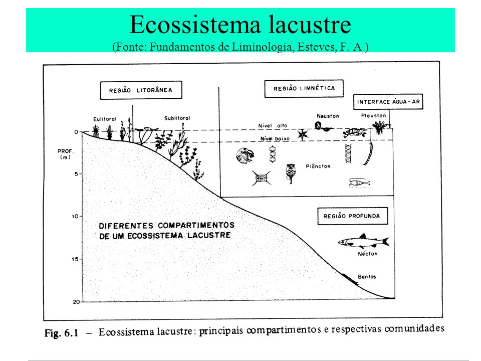 Ecossistema lacustre (Fonte: Fundamentos de Liminologia, Esteves, F