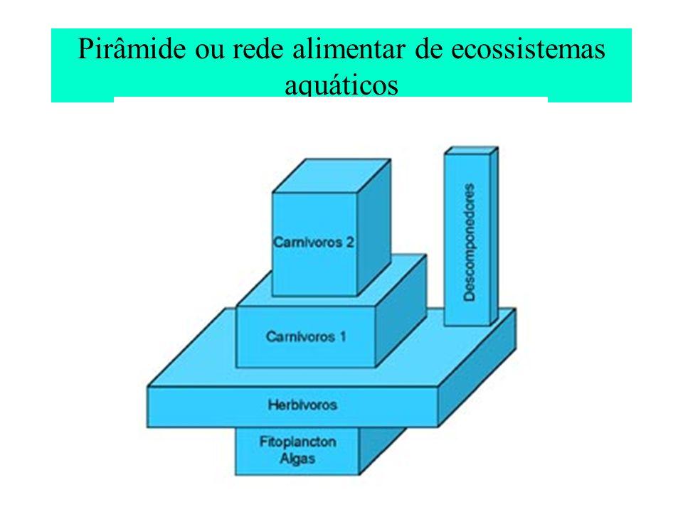 Pirâmide ou rede alimentar de ecossistemas aquáticos