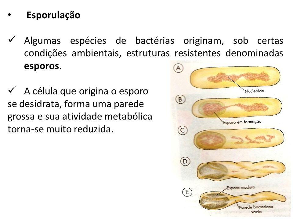 Esporulação Algumas espécies de bactérias originam, sob certas condições ambientais, estruturas resistentes denominadas esporos.