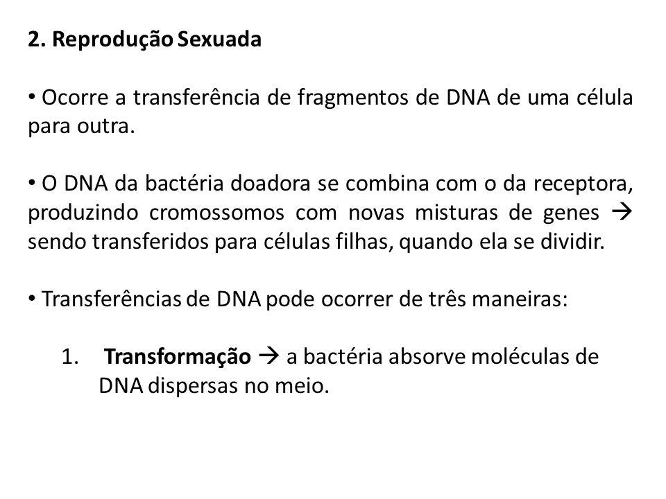 2. Reprodução SexuadaOcorre a transferência de fragmentos de DNA de uma célula para outra.