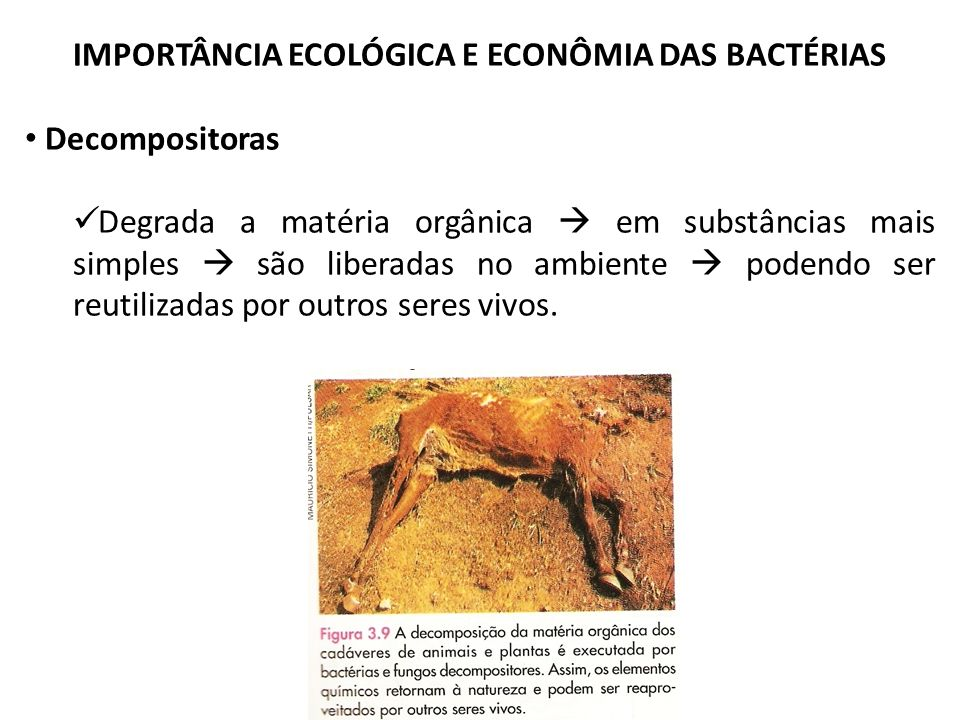 IMPORTÂNCIA ECOLÓGICA E ECONÔMIA DAS BACTÉRIAS